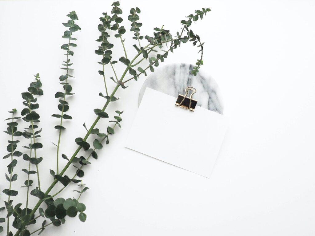 緑の枝と白いカード